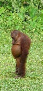 monkey-slump