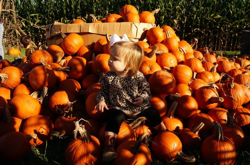 audrey pumpkins